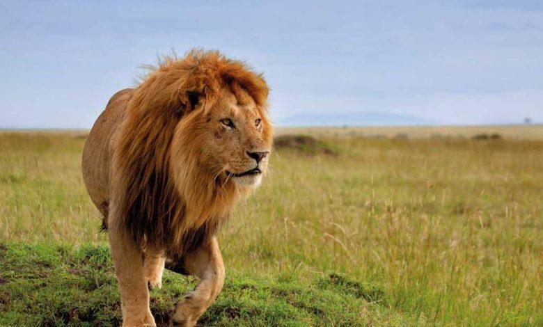 صورة من مميزات السفر إلى كينيا التعرف على التاريخ