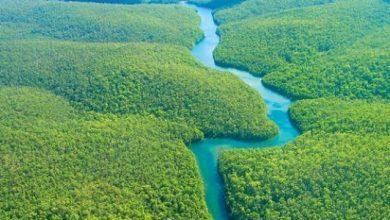 صورة أجمل الغابات في العالم