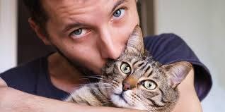 صورة القطط في المنام