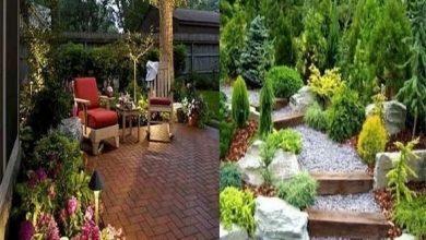 صورة ديكور حديقة المنزل في عدة خطوات