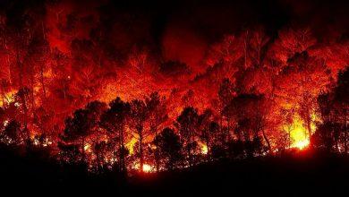 صورة حريق تنومة … حريق هائل في غابات السعودية