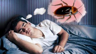 صورة تفسير حلم الصراصير في المنام للعزباء والحامل والمتزوجين