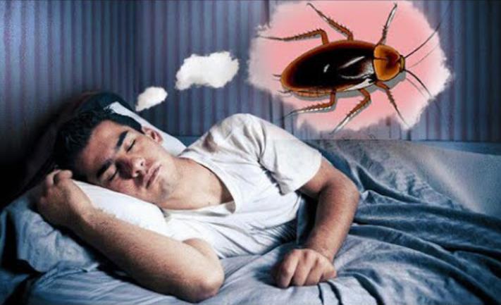 تفسير حلم الصراصير في المنام